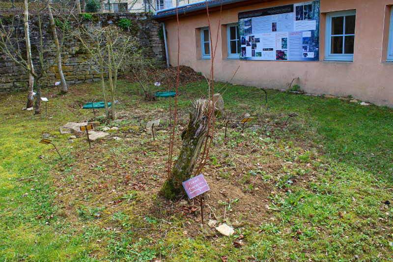 jardin neolithique-1 à Bourguignon lès Morey